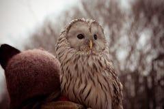El búho Fotografía de archivo libre de regalías