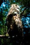 El búho en el parque zoológico Imagen de archivo libre de regalías