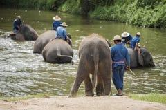 El baño de los Mahouts y limpia los elefantes en el río Foto de archivo libre de regalías