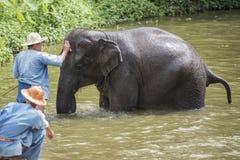 El baño de los Mahouts y limpia los elefantes en el río Fotos de archivo
