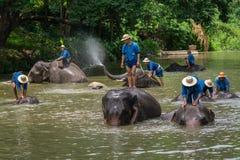 El baño de los Mahouts y limpia los elefantes en el río Foto de archivo