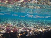 El bajío de pescados Foto de archivo libre de regalías