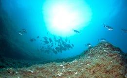 El bajío de pescados nada junto para encontrar la comida abajo del mar Imagen de archivo libre de regalías