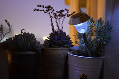 El balcón casero, Rosemary, florece las plantas suculentas, lámpara solar encendida, siluetas de las flores Imagen de archivo