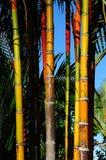 El bambú Imagenes de archivo