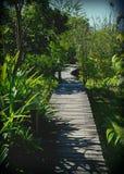 el bambú Foto de archivo libre de regalías