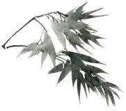 El bambú de la acuarela sale de la rama Imagen de archivo