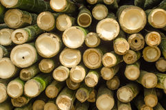 El bambú del corte. imagenes de archivo