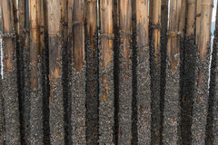El bambú protege la arena contra onda del mar Fotos de archivo libres de regalías