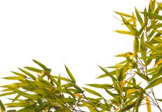 El bambú sale del marco Imagen de archivo libre de regalías