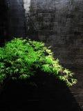 El bambú sceen Imágenes de archivo libres de regalías