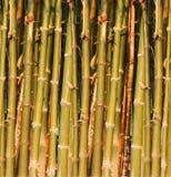 El bambú verde cierra el â para arriba. Imagen de archivo