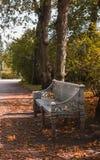 El banco adornado con la naranja se va en el parque en otoño foto de archivo