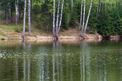 El banco escarpado del río reflejó en el abedul de agua Fotos de archivo