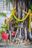El baniano de Tailandia del alcohol adornó con las cintas y el espiritual a Imagen de archivo libre de regalías