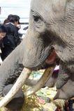El banquete de la mañana del elefante Imagenes de archivo