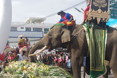 El banquete de la mañana del elefante Fotografía de archivo libre de regalías