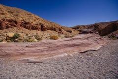 El barranco rojo en el Israil y el sol se enciende con la planta verde en el desierto imagen de archivo libre de regalías