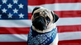 El barro amasado joven con la bandera americana almacen de video