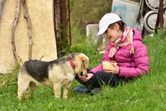 El bebé alimenta el perro de la mano Imagen de archivo libre de regalías