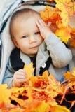 El bebé caucásico con los ojos azules que se sientan en cochecito con caída amarilla del otoño se va Imagenes de archivo
