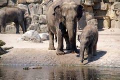 el bebé del elefante aprende beber 3 Foto de archivo libre de regalías