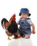 El bebé resuelve el gallo fotos de archivo