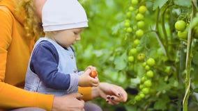 El bebé y la abuela está escogiendo los tomates almacen de metraje de vídeo