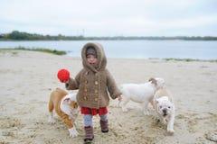 El bebé y los perritos gritadores de un dogo juegan en la playa en el otoño Foto de archivo libre de regalías