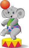El becerro del elefante en circo Imagenes de archivo