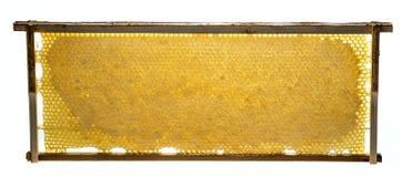 el beeframe con textura de los beecombs con la miel Imagen de archivo libre de regalías