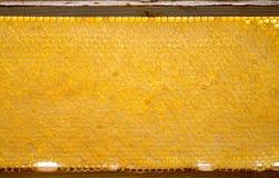 el beeframe con textura de los beecombs con la miel Fotos de archivo libres de regalías