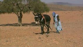 El Berber ara la tierra rocosa marruecos África del Norte almacen de video