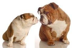 El besarse de dos perros Fotos de archivo libres de regalías