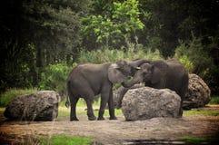 El besarse de los elefantes Foto de archivo libre de regalías