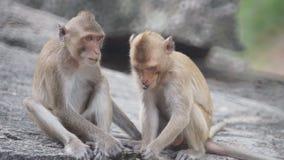 El besarse del mono almacen de metraje de vídeo