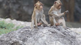 El besarse del mono almacen de video