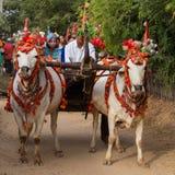 El búfalo adornado y la gente local que participaron en la donación canalizaron ceremonia en Bagan Myanmar, Birmania Foto de archivo libre de regalías
