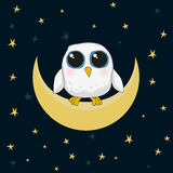 El búho lindo blanco se está sentando en la luna en la noche Foto de archivo libre de regalías