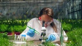 El biólogo de sexo femenino trabaja con un microscopio en un invernadero almacen de video