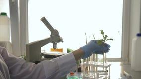 El biólogo trabaja con las muestras de verdor en tubos de ensayo en el laboratorio experimental moderno en la iluminación viva almacen de metraje de vídeo