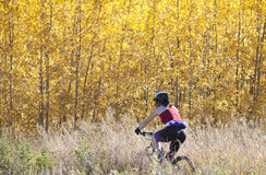 El biking de la montaña de la mujer Foto de archivo libre de regalías