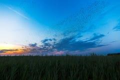 El Birdwatching en el Kiekkaste Imagenes de archivo
