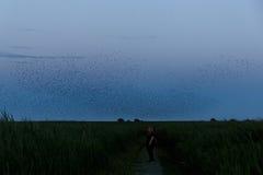 El Birdwatching en el Kiekkaste Fotos de archivo