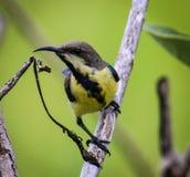 El birdy curioso Foto de archivo libre de regalías