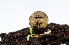 El bitcoin de oro acuña en un suelo y una planta creciente Moneda virtual Moneda Crypto nuevo dinero virtual foto de archivo