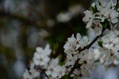 el blanco de la primavera coloreó las hojas en luz del sol brillante Foto de archivo libre de regalías