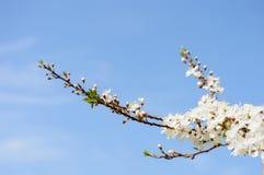 el blanco de la primavera coloreó las hojas en luz del sol brillante Fotografía de archivo libre de regalías