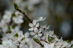 el blanco de la primavera coloreó las hojas en luz del sol brillante Imagen de archivo