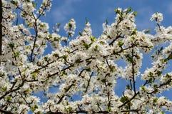 el blanco de la primavera coloreó las hojas en luz del sol brillante Imagen de archivo libre de regalías